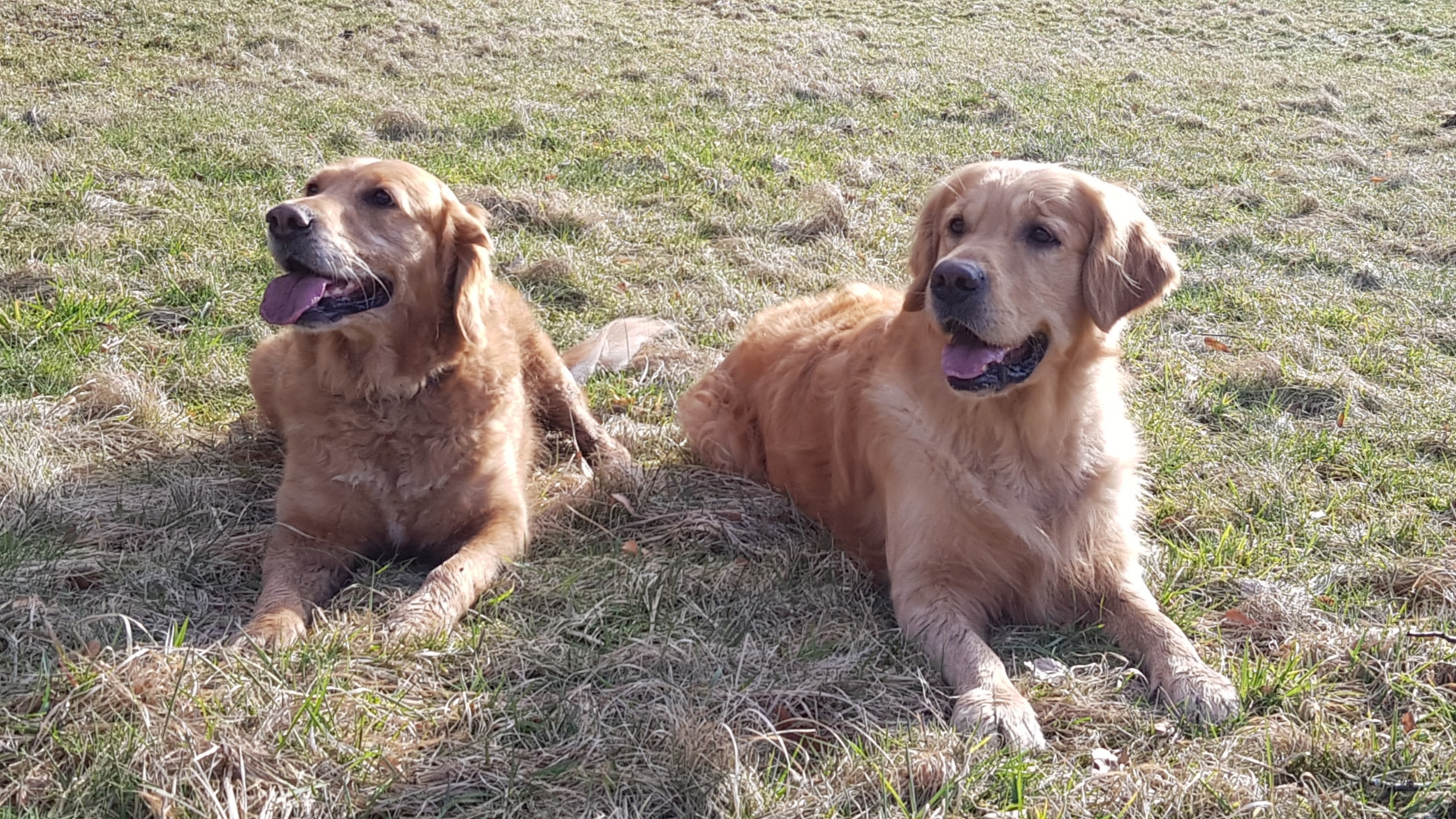 Bella und Ruede 2