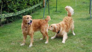 Hundehochzeit